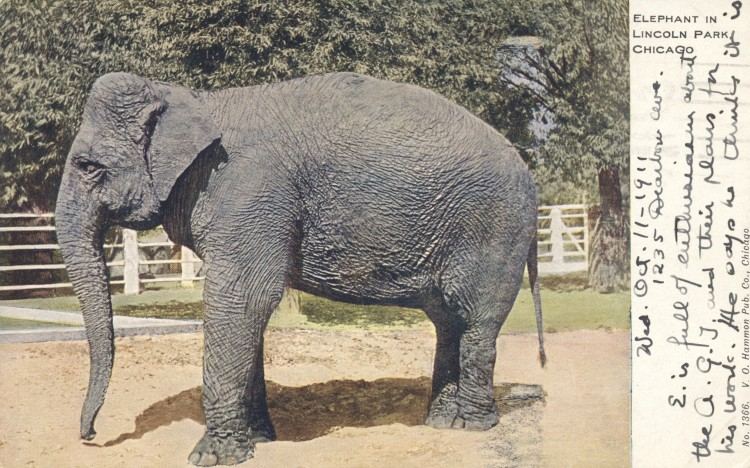 il-chicago-lincoln-park-zoo
