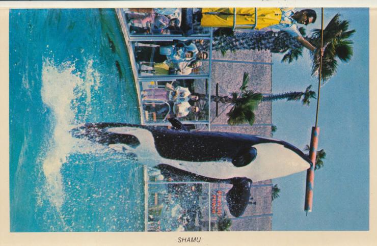 CA, San Diego - Sea World (7)